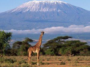 Mount Kilimanjaro, the highest mountain in Africa